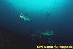 Dive Tulamben 10