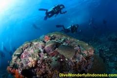 divewonderfulindonesia029