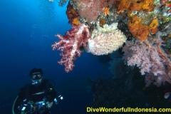divewonderfulindonesia038