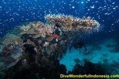 divewonderfulindonesia040