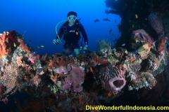divewonderfulindonesia076