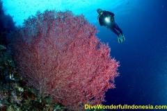 divewonderfulindonesia084