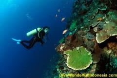 divewonderfulindonesia1160