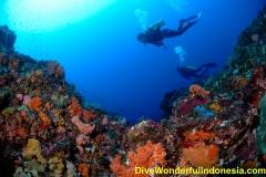 divewonderfulindonesia1167