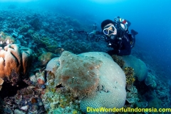 divewonderfulindonesia1240