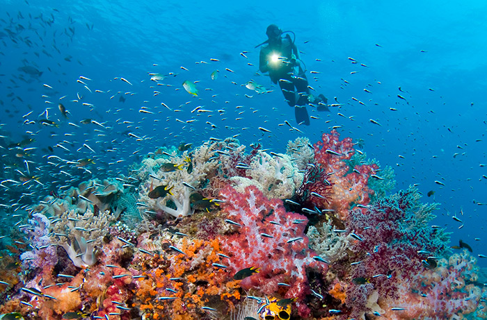 Welcome to Indonesia Diving